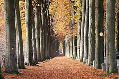 Perspective de hêtres, Belgique