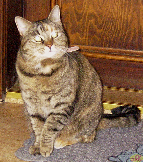 2004-03-21 04 najbara kato