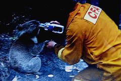 Australia, forest fires, major disaster' solidarity (2)