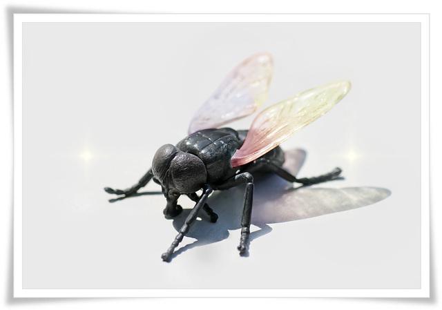 My Fly