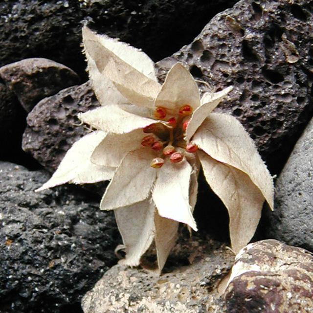 'Blosseration'