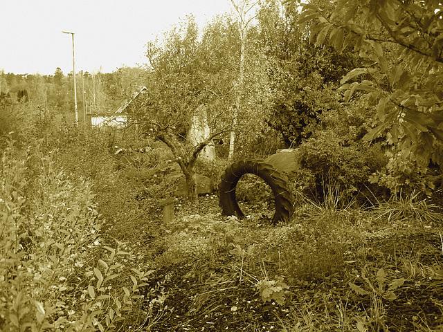 Pneu décoratif parmi la verdure suédoise / Tyre among the swedish  greenery - Båstad  /  Suède - Sweden.   21-10- 2008 - Sepia