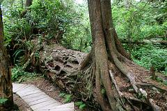 Nursery Log at Schooner Trail
