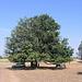 Notre auto sous l'arbre