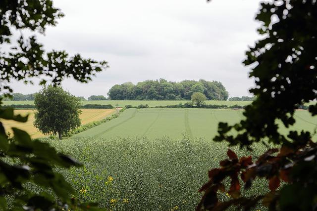 Wiltshire (1)