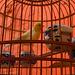 Bird prison