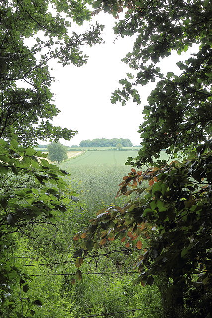 Wiltshire (2)