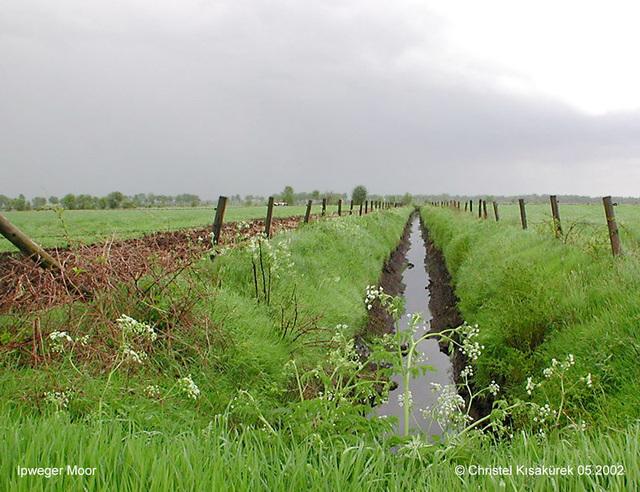 DSCN0803 Ipweger Moor
