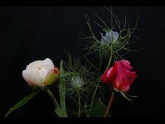 mort d'un bouquet,l'intégrale .....??