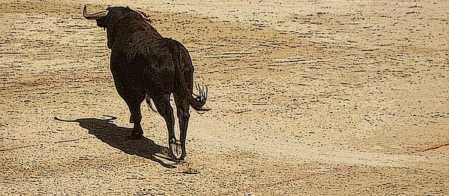 toro sur sable