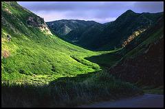Hawaiian contrasts.......