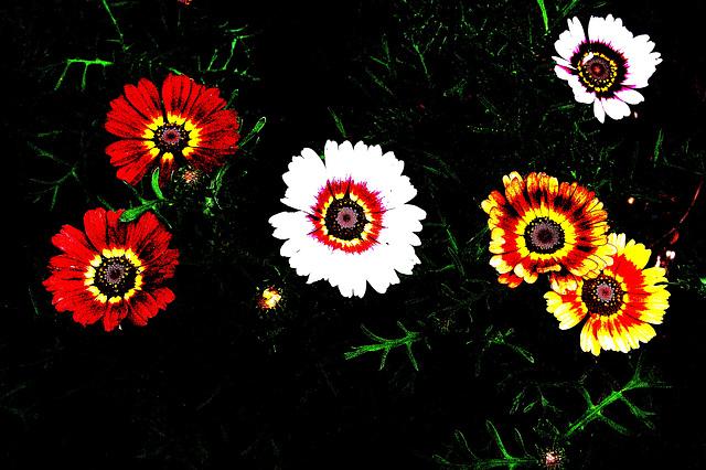 Flower Power (Indian nation) II