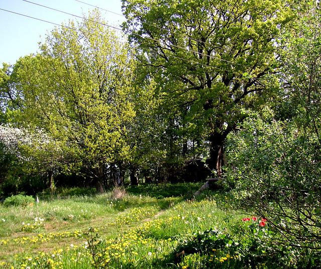 Garten auf Rügen