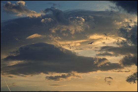 evening bird......