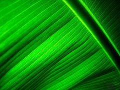 Happy Green Friday!