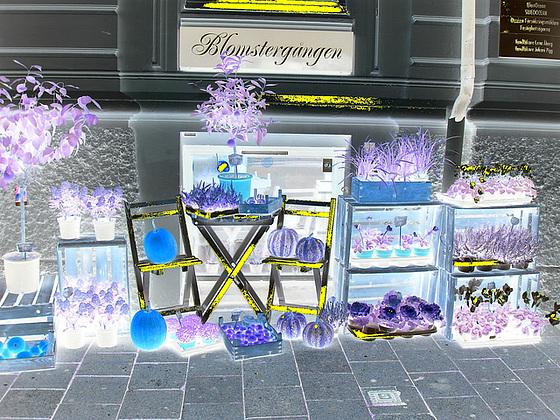 Délice visuel d'un trottoir Blomsterganten /  Blomsterganten sidewalk display  -   Helsingborg / Suède - Sweden.  22 octobre 2008- Negative artwork with a hint of yellow / Négatif et touche de jaune