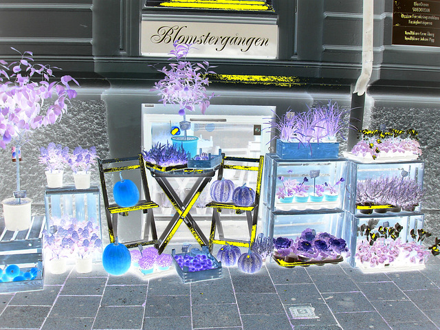 Délice visuel d'un trottoir Blomsterganten /  Blomsterganten sidewalk display - Negative artwork with a hint of yellow / Négatif et touche de jaune