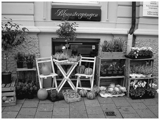 Délice visuel d'un trottoir Blomsterganten /  Blomsterganten sidewalk display - Noir et blanc