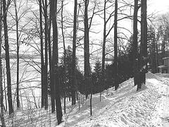 Paysages d'hiver à proximité de l'abbaye de St-Benoit-du-lac au Québec / 7 Février 2009 - B & W