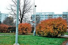 Fall Colors in Sidliste Haje, Prague, CZ, 2008
