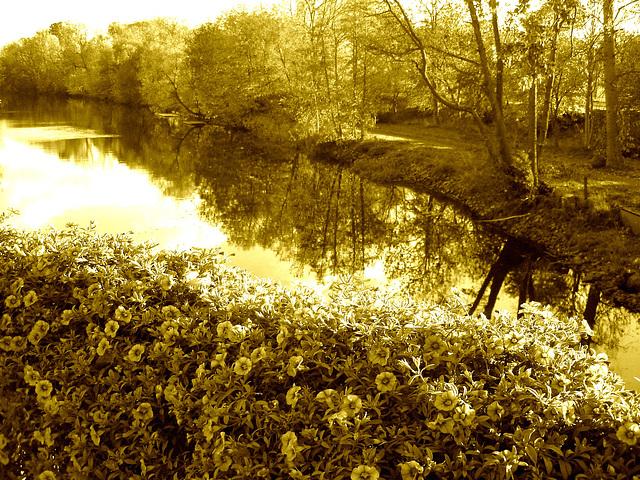 Reflet de rivière et fleurs de rive / River reflection and bank flowers - Ängelholm / Suède / Sweden.  23 octobre 2008- Sepia