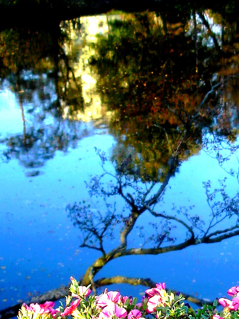 Reflet de rivière et fleurs de rive / River reflection and bank flowers - Ängelholm / Suède - Sweden -  23 octobre 2008 /  Recadrage