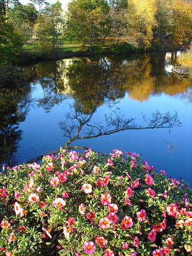 Reflet de rivière et fleurs de rive / River reflection and bank flowers - Ängelholm / Suède / Sweden.  23 octobre 2008