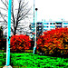 Fall Colors in Sidliste Haje, Supersaturated Version 2, Prague, CZ, 2008