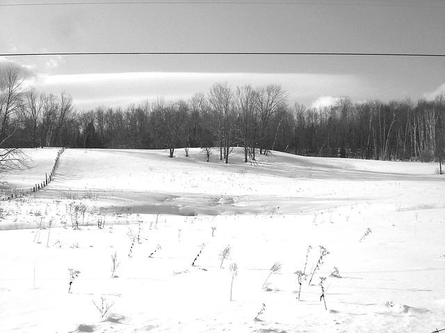 Paysages d'hiver à proximité de l'abbaye de St-Benoit-du-lac au Québec .  7 Février 2009-  B & W