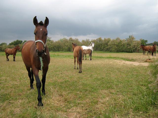 IMG 2160 Pferde 1