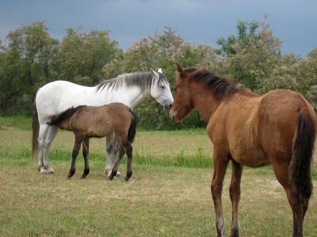 IMG 2161 Pferde 2