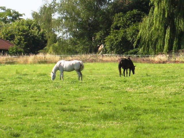 Les chevaux de l'Ancoeur