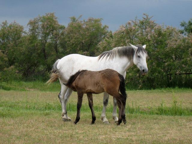 IMG 2162 Pferde 3