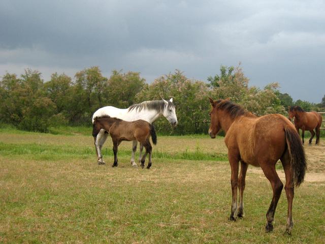 IMG 2163 Pferde 4