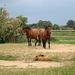 IMG 2164 Pferde 5
