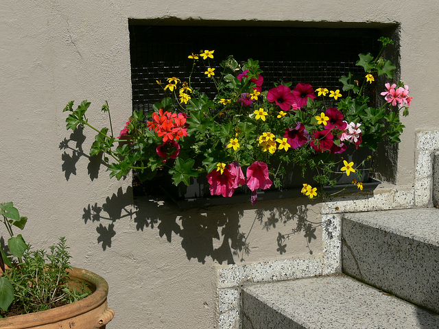 Blumenkasten am Kellerfenster