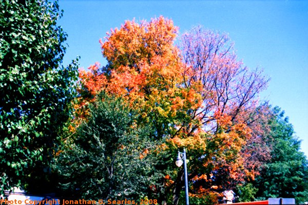 Fall Colors in Saratoga Springs, Edit for Color, NY, USA, 2008