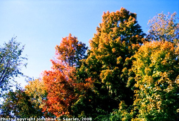 Fall Colors in Saratoga Springs, Picture 3, Edit for Color, NY, USA, 2008