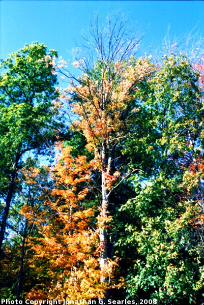 Fall Colors at I90 Rest Stop, Picture 2, Edit for Color, NY, USA, 2008