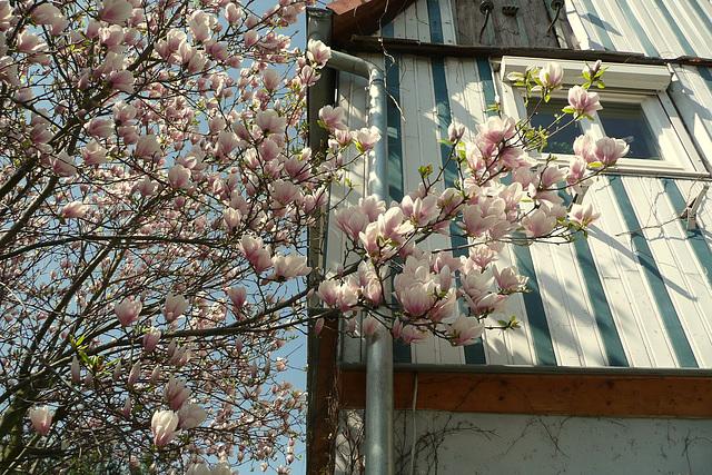 Ostern 2009 vor meinem Hause - antaû mia domo - devant ma maison