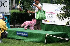 16.PrideOfPetsFunDogShow.Dupont.WDC.21June2009