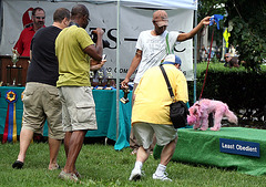 17.PrideOfPetsFunDogShow.Dupont.WDC.21June2009
