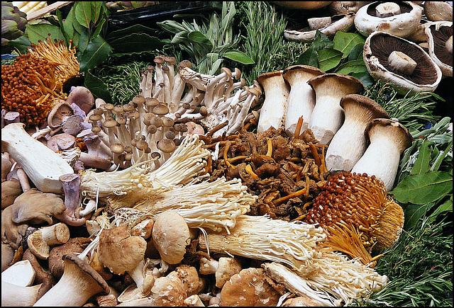 Fungal display