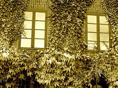 Maison  Skanegarden house - Båstad / Suède - Sweden.  21-10-2008  -  Version sépiatisée