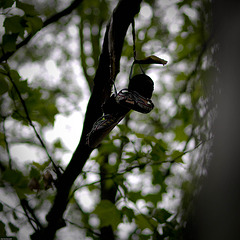 Shoes in Tree