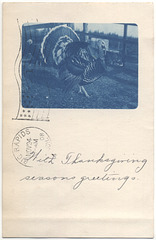 Thanksgiving Season's Greetings, 1908