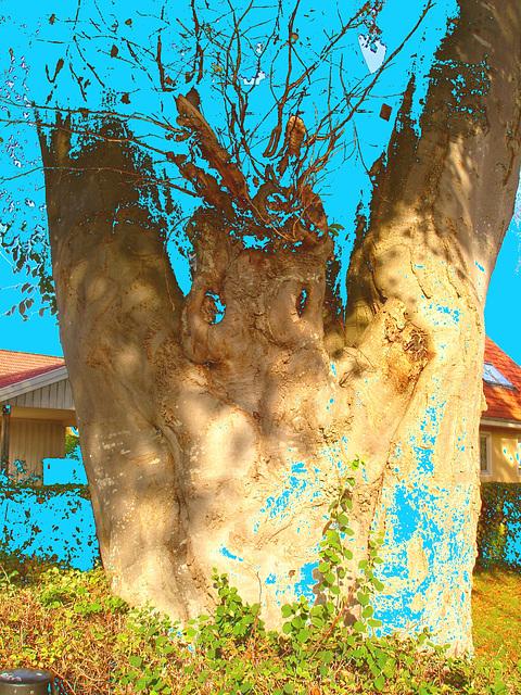 Arbre fantôme / Ghost tree.  Båstad  / Suède - Sweden.   Octobre 2008 - Changement de couleur