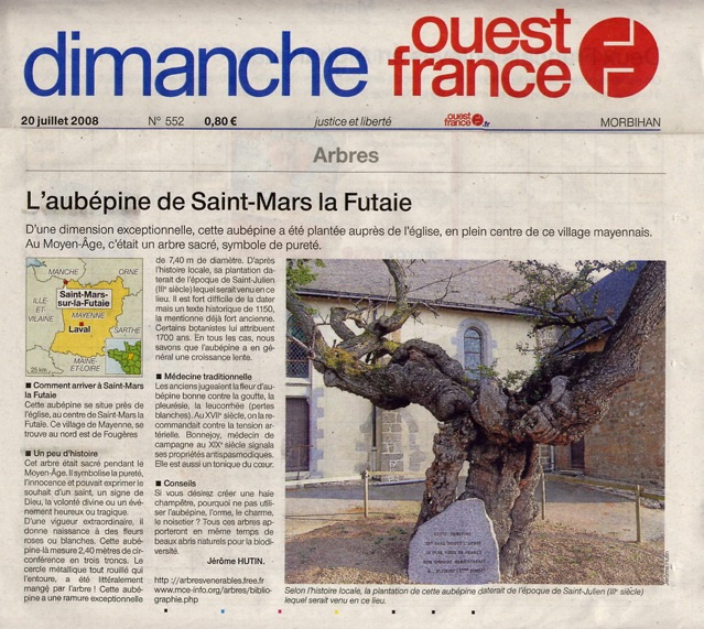Aubépine [IIIème s.] à Saint-Mars la Futaie, Mayenne