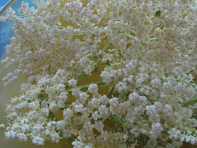 Holunderblütengelée (05)