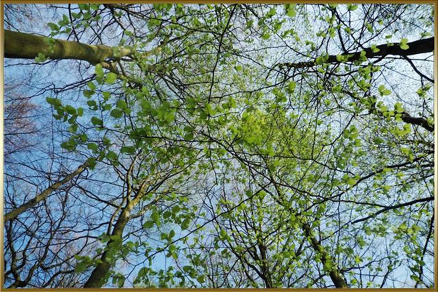 Blätterreigen